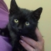 Onyx Available for Adoption! – ADOPTED!